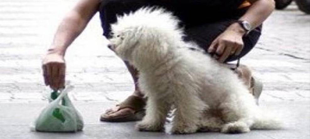 Deiezioni canine: obbligo rimozione e pulizia