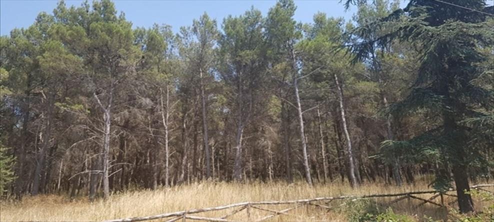 Concessione della gestione  del Bosco Finizio  e della Pineta del Castel del Monte: pubblicato  bando di gara